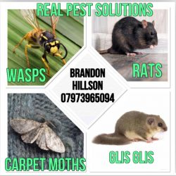 Real Pest Solutions